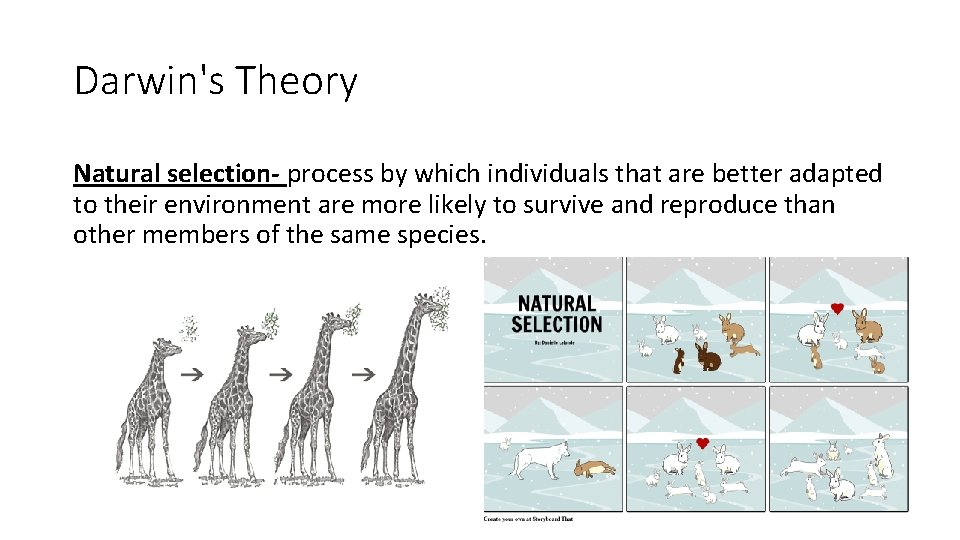 Darwin's Theory Natural selection- process by which individuals that are better adapted to their