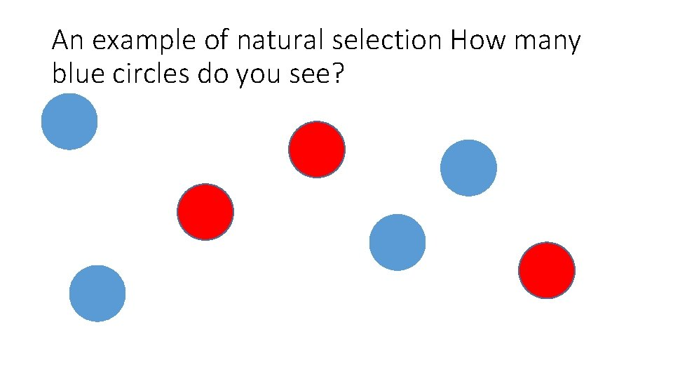 An example of natural selection How many blue circles do you see?