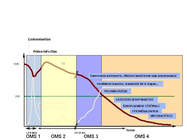 Évolution naturelle Contamination Primo-infection T 4 1000 Tuberculose pulmonaire, infection bactérienne type pneumococcie Candidoses