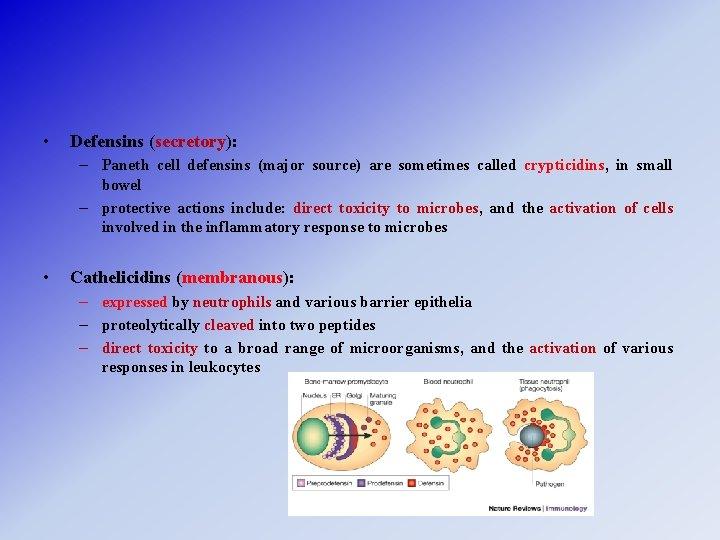 • Defensins (secretory): – Paneth cell defensins (major source) are sometimes called crypticidins,