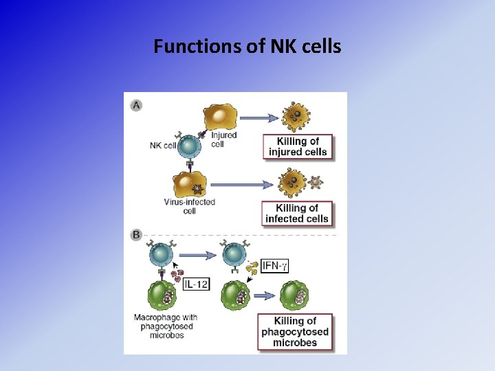Functions of NK cells
