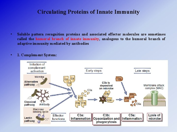 Circulating Proteins of Innate Immunity • Soluble pattern recognition proteins and associated effector molecules