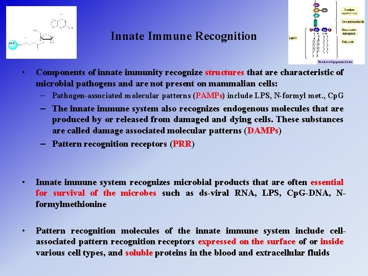 Innate Immune Recognition • Components of innate immunity recognize structures that are characteristic of