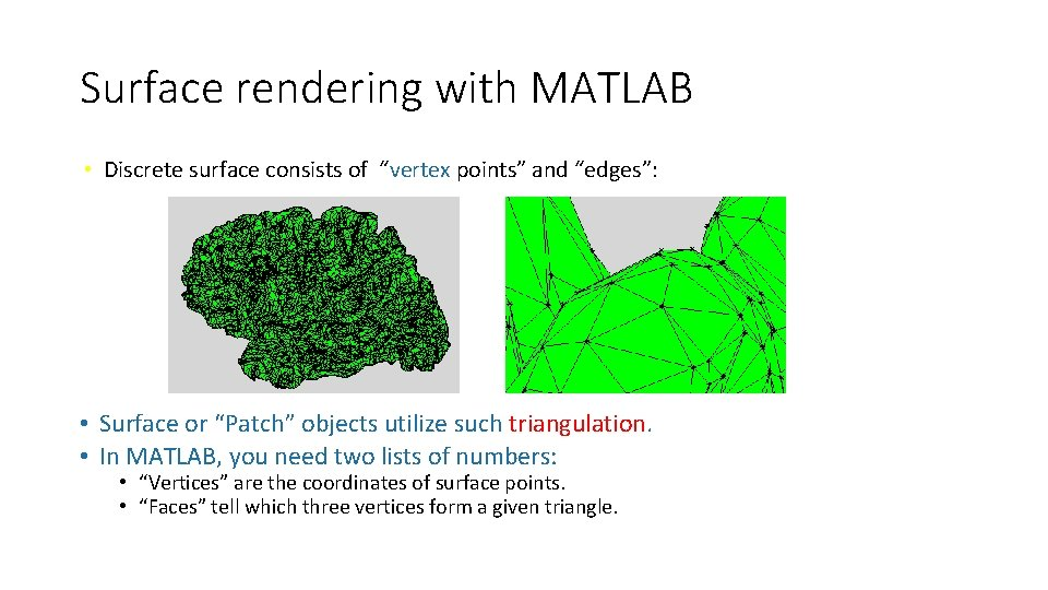 """Surface rendering with MATLAB • Discrete surface consists of """"vertex points"""" and """"edges"""": •"""