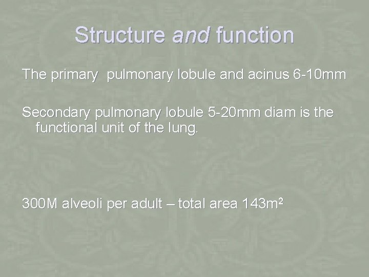 Structure and function The primary pulmonary lobule and acinus 6 -10 mm Secondary pulmonary