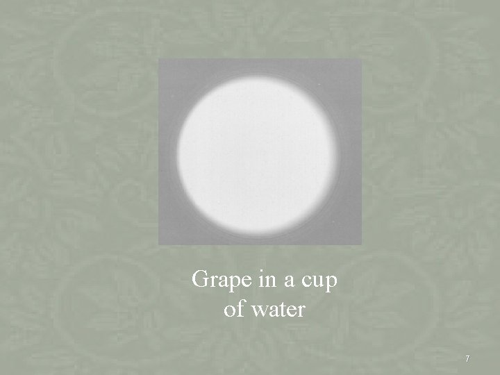 Grape in a cup of water 7