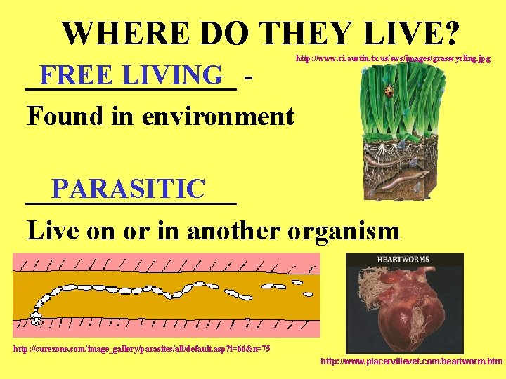 WHERE DO THEY LIVE? FREE LIVING ________ Found in environment http: //www. ci. austin.
