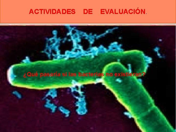 ACTIVIDADES DE EVALUACIÓN. . ¿Qué pasaría si las bacterias no existieran?