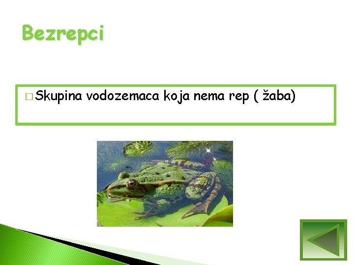 Bezrepci � Skupina vodozemaca koja nema rep ( žaba)