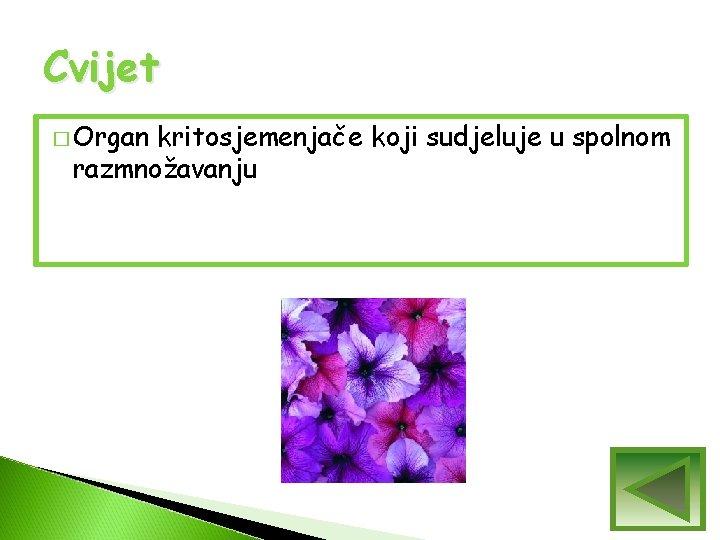 Cvijet � Organ kritosjemenjače koji sudjeluje u spolnom razmnožavanju
