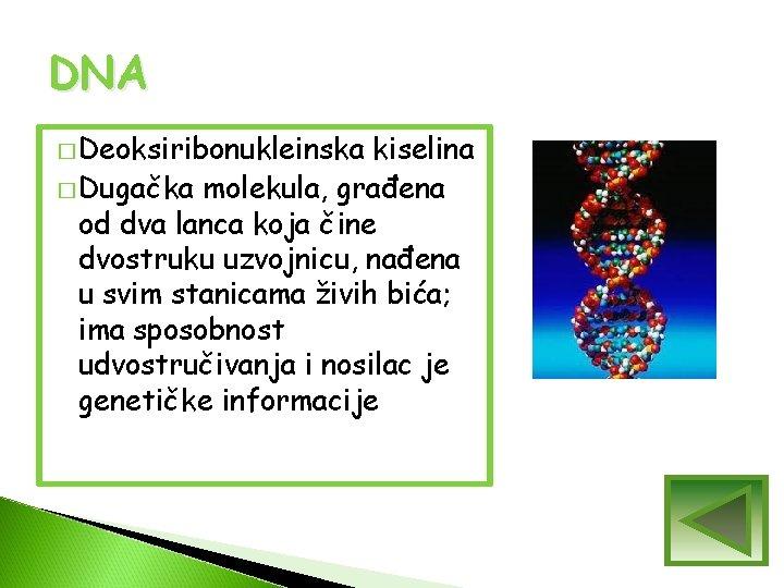 DNA � Deoksiribonukleinska kiselina � Dugačka molekula, građena od dva lanca koja čine dvostruku