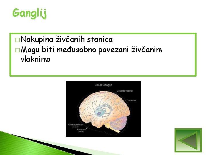 Ganglij � Nakupina živčanih stanica � Mogu biti međusobno povezani živčanim vlaknima