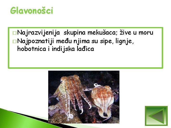 Glavonošci � Najrazvijenija skupina mekušaca; žive u moru � Najpoznatiji među njima su sipe,