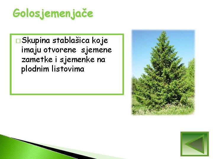 Golosjemenjače � Skupina stablašica koje imaju otvorene sjemene zametke i sjemenke na plodnim listovima