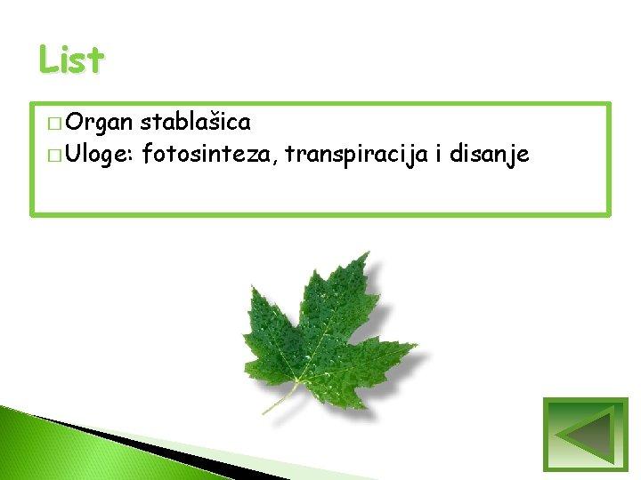 List � Organ stablašica � Uloge: fotosinteza, transpiracija i disanje
