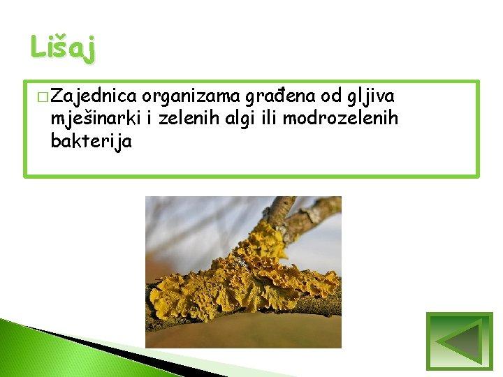 Lišaj � Zajednica organizama građena od gljiva mješinarki i zelenih algi ili modrozelenih bakterija