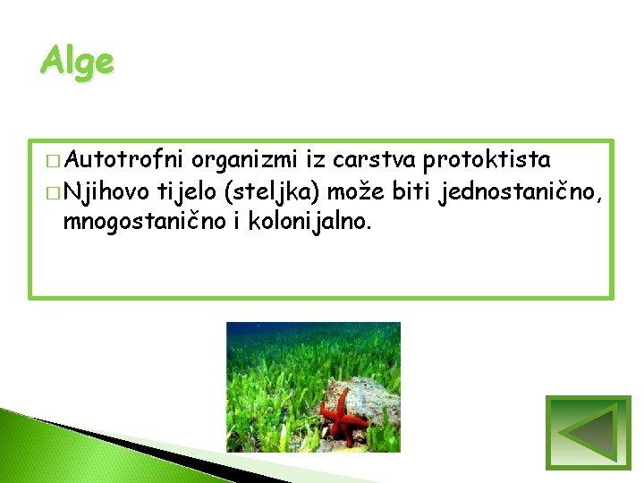 Alge � Autotrofni organizmi iz carstva protoktista � Njihovo tijelo (steljka) može biti jednostanično,