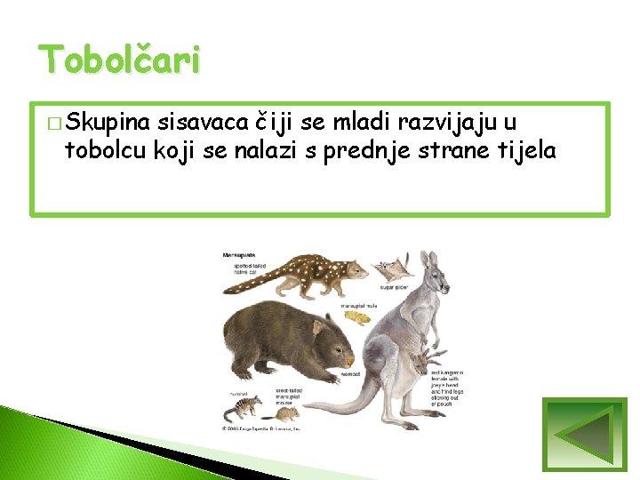 Tobolčari � Skupina sisavaca čiji se mladi razvijaju u tobolcu koji se nalazi s