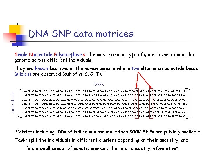DNA SNP data matrices Single Nucleotide Polymorphisms: the most common type of genetic variation
