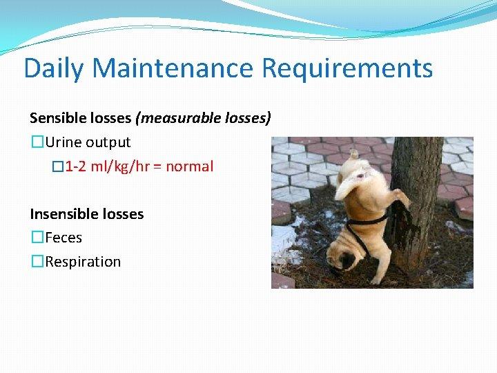 Daily Maintenance Requirements Sensible losses (measurable losses) �Urine output � 1 -2 ml/kg/hr =
