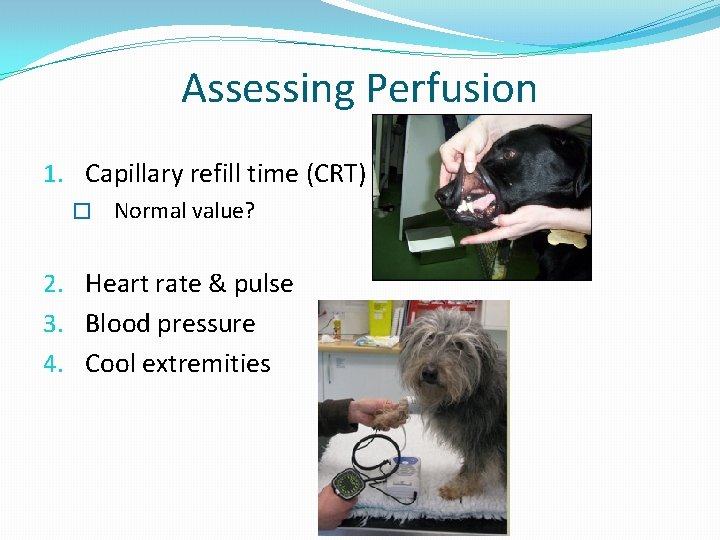 Assessing Perfusion 1. Capillary refill time (CRT) � Normal value? 2. Heart rate &