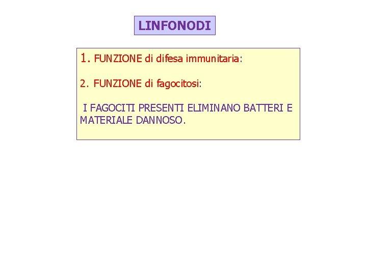 LINFONODI 1. FUNZIONE di difesa immunitaria: 2. FUNZIONE di fagocitosi: I FAGOCITI PRESENTI ELIMINANO