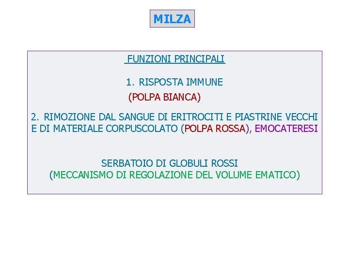 MILZA FUNZIONI PRINCIPALI 1. RISPOSTA IMMUNE (POLPA BIANCA) 2. RIMOZIONE DAL SANGUE DI ERITROCITI