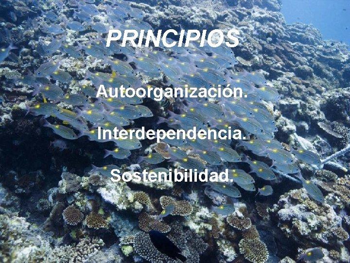 PRINCIPIOS Autoorganización. Interdependencia. Sostenibilidad.