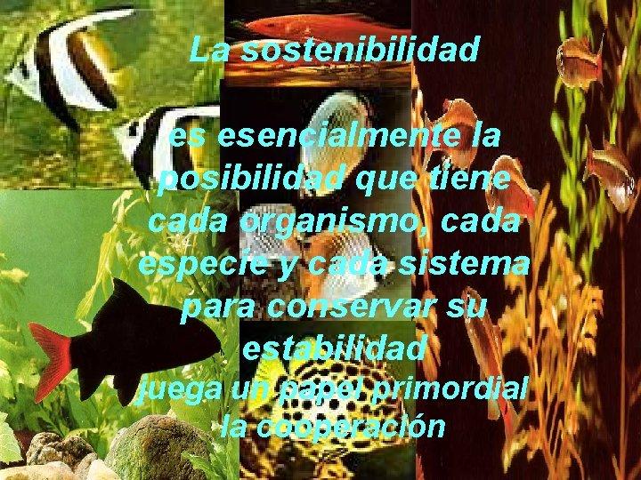 La sostenibilidad es esencialmente la posibilidad que tiene cada organismo, cada especie y cada
