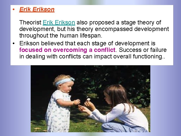 • Erikson Theorist Erikson also proposed a stage theory of development, but his