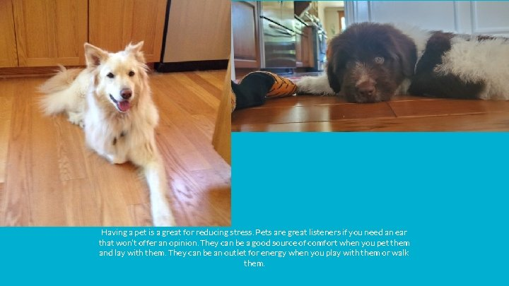 Having a pet is a great for reducing stress. Pets are great listeners if