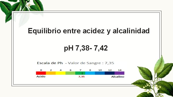 Equilibrio entre acidez y alcalinidad p. H 7, 38 - 7, 42