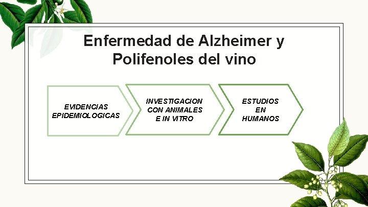Enfermedad de Alzheimer y Polifenoles del vino EVIDENCIAS EPIDEMIOLOGICAS INVESTIGACION CON ANIMALES E IN