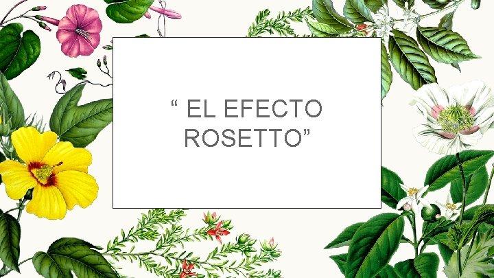 """"""" EL EFECTO ROSETTO"""""""