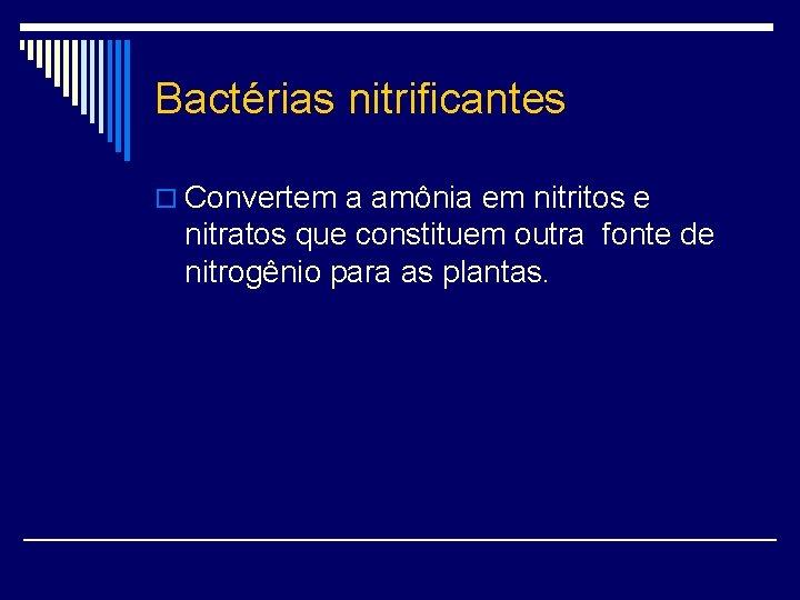 Bactérias nitrificantes o Convertem a amônia em nitritos e nitratos que constituem outra fonte