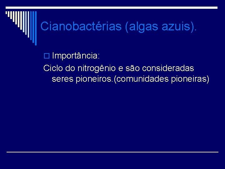 Cianobactérias (algas azuis). o Importância: Ciclo do nitrogênio e são consideradas seres pioneiros. (comunidades