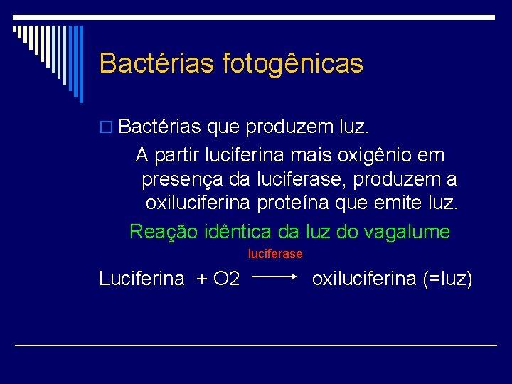 Bactérias fotogênicas o Bactérias que produzem luz. A partir luciferina mais oxigênio em presença