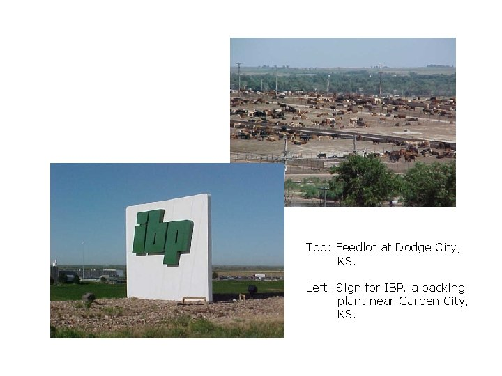 Top: Feedlot at Dodge City, KS. Left: Sign for IBP, a packing plant near