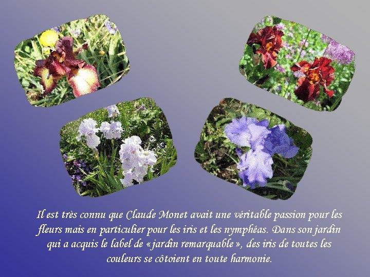 Il est très connu que Claude Monet avait une véritable passion pour les fleurs