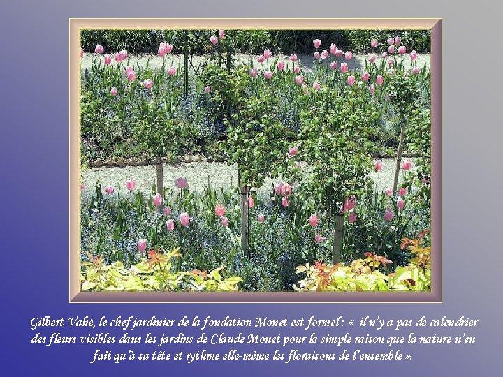 Gilbert Vahé, le chef jardinier de la fondation Monet est formel : « il