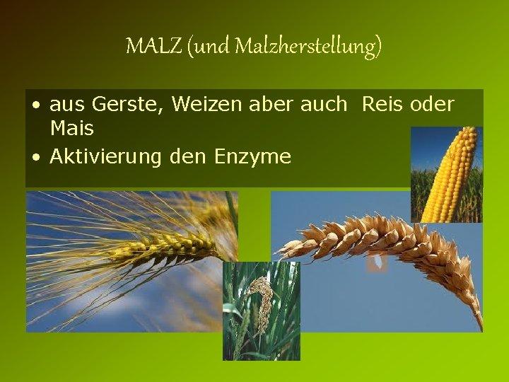 MALZ (und Malzherstellung) • aus Gerste, Weizen aber auch Reis oder Mais • Aktivierung