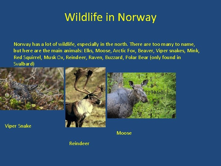 Wildlife in Norway has a lot of wildlife, especially in the north. There are