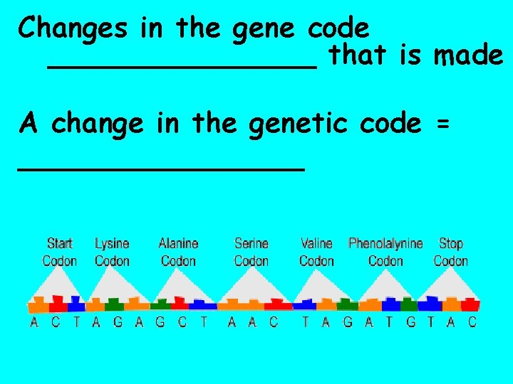Changes in the gene code ________ that is made A change in the genetic