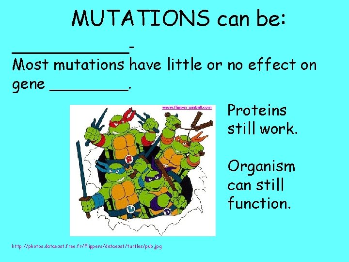 MUTATIONS can be: ______Most mutations have little or no effect on gene ____. Proteins