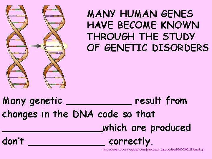 MANY HUMAN GENES HAVE BECOME KNOWN THROUGH THE STUDY OF GENETIC DISORDERS Many genetic