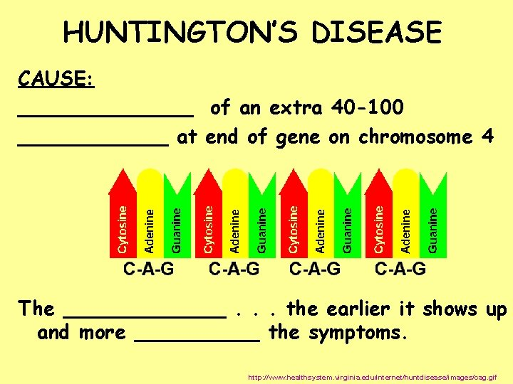 HUNTINGTON'S DISEASE CAUSE: _______ of an extra 40 -100 ______ at end of gene