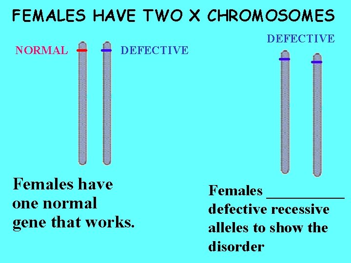 FEMALES HAVE TWO X CHROMOSOMES NORMAL DEFECTIVE Females have one normal gene that works.