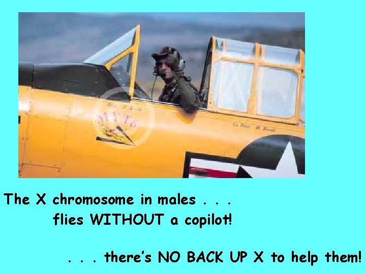 The X chromosome in males. . . flies WITHOUT a copilot!. . . there's