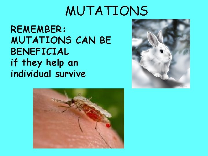 MUTATIONS REMEMBER: MUTATIONS CAN BE BENEFICIAL if they help an individual survive