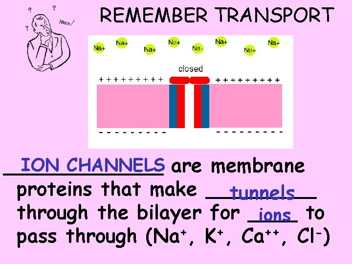 REMEMBER TRANSPORT ION CHANNELS are membrane _______ proteins that make _____ tunnels through the